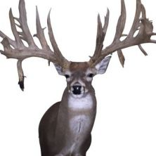 Big Rack Ranch Whitetail Breeder Bucks - Kid Dynamite